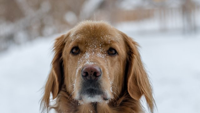 Keeping Your Dog Safe in Winter