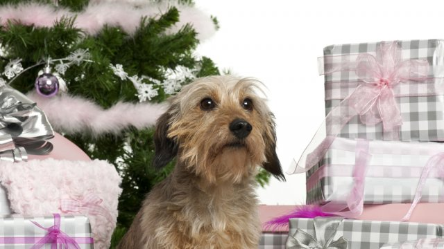 Why Dogs Don't Make Good Holiday Presents