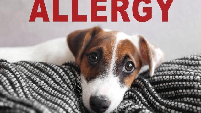 Understanding Dogs and Allergies