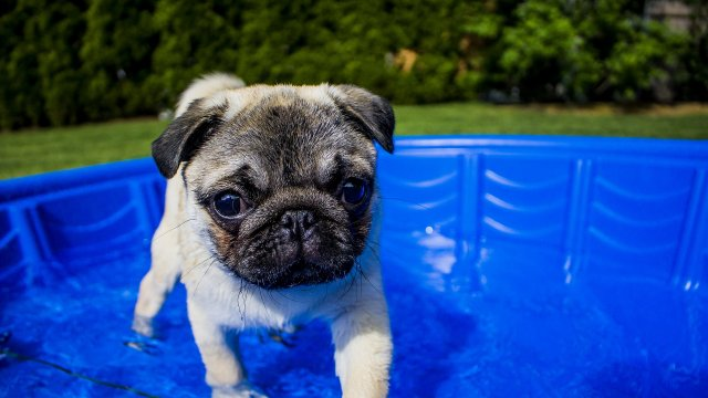Help Your Dog Get Over His Fear of Water