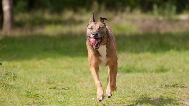Will Training Change Your Dog's Personality