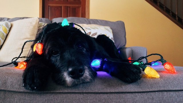 The holidays and your dog