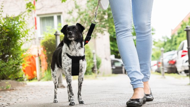 Why Retractable Leashes Can Be Dangerous