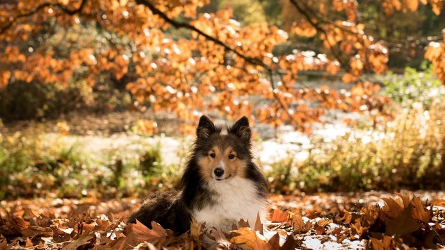 Autumn Safety Tips for your Dog