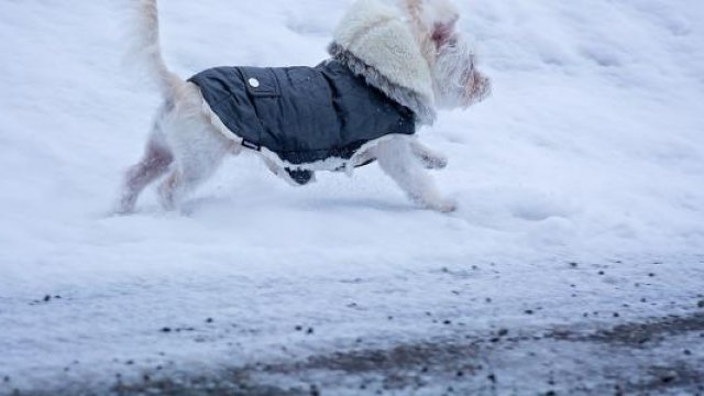 How to Know If Your Pup Needs Winter Gear