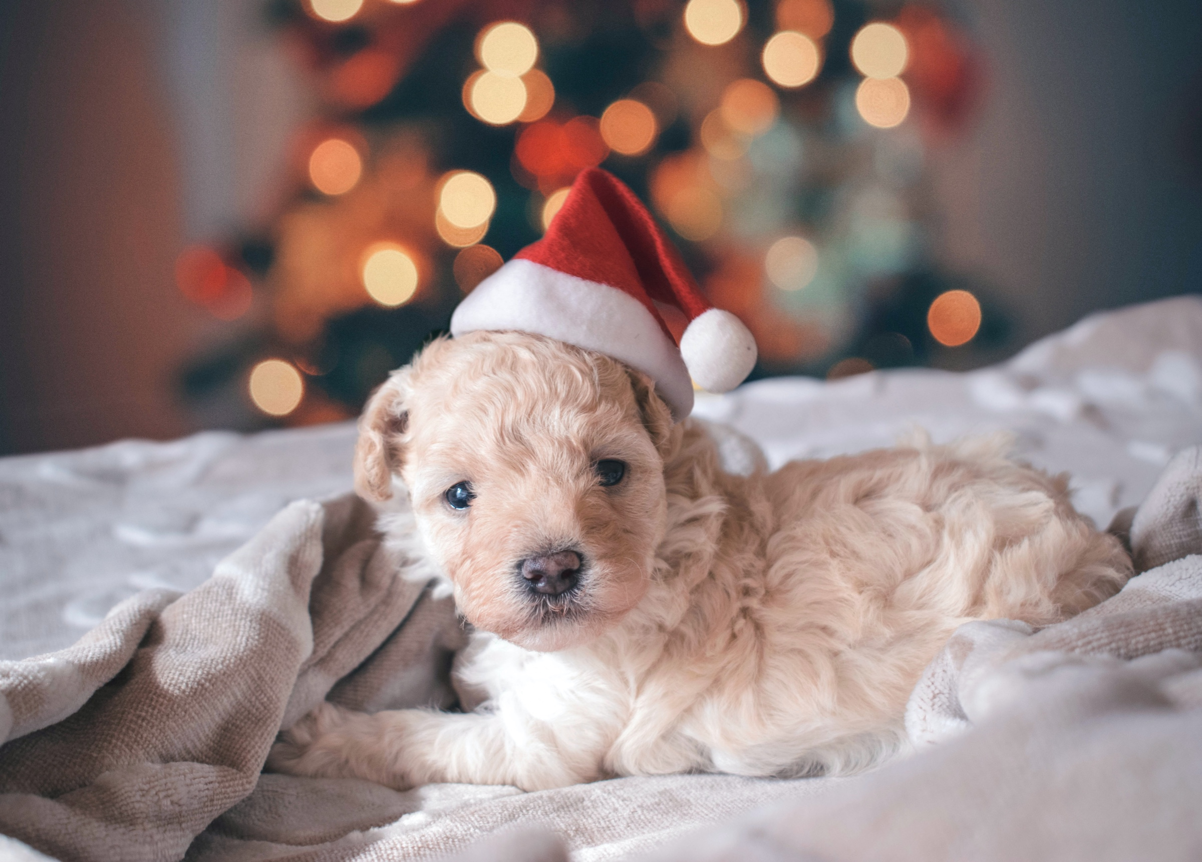 Keeping your dog safe at Christmas